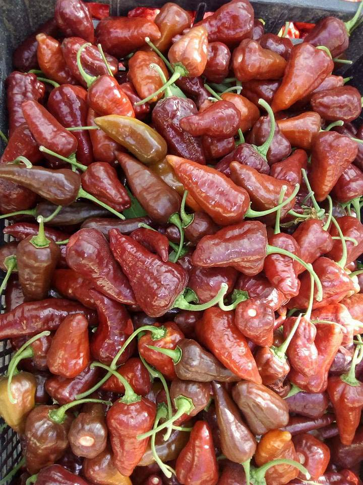 chocolate-chili-peppers